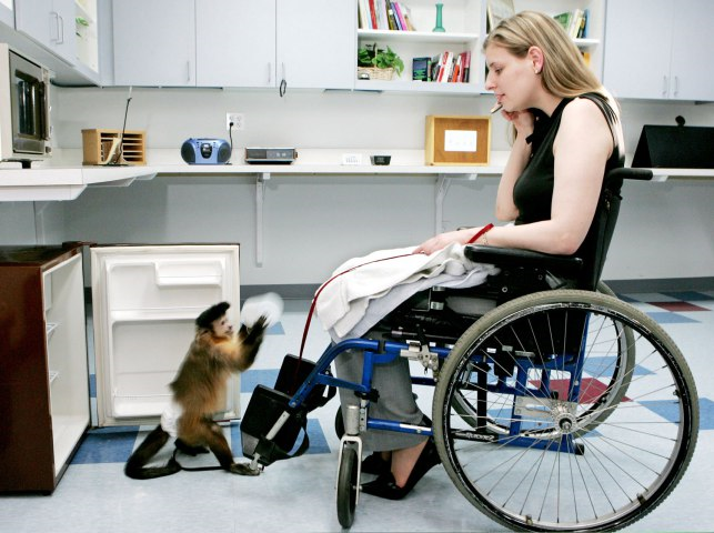 7 unique service animals thethings