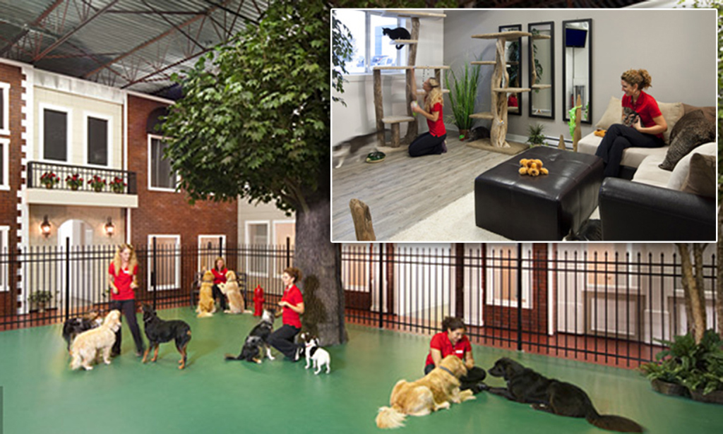 20 Most Luxurious Pet Hotels Around The World Thethings