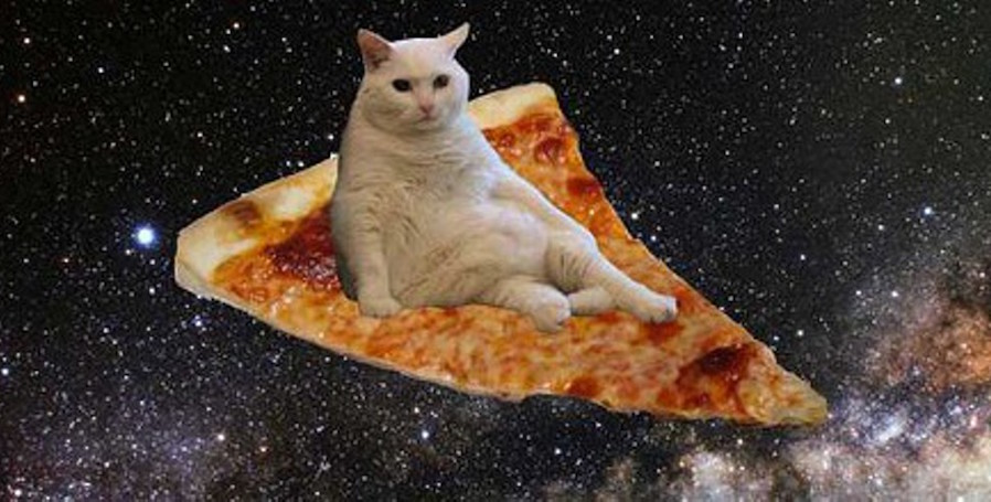 Cats Riding Food In Space