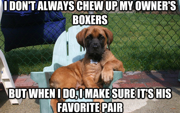 15 Memes Only Dog Owners Will Understand Thethings
