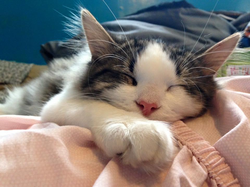 cat power sea of love
