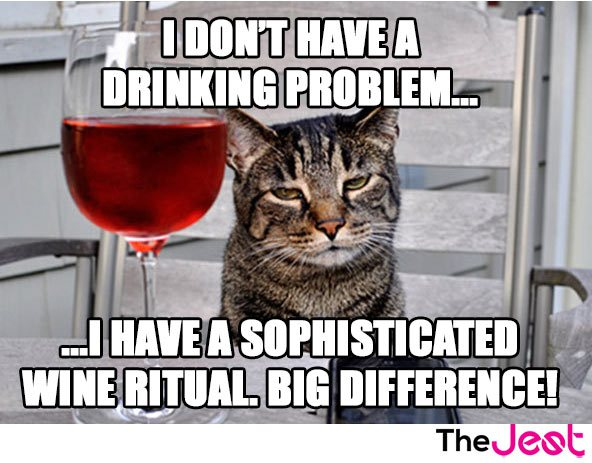 Funny Cat Drinking Meme : Memes that only wine lovers will get thethings