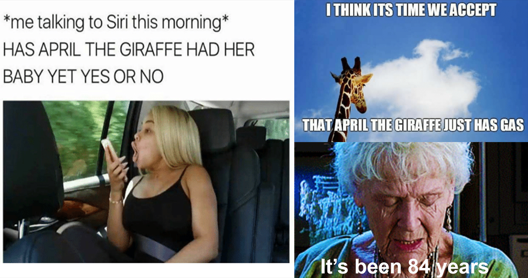 April the giraffe feat 15 hilarious april the giraffe memes for those who are tired of,Giraffe Meme