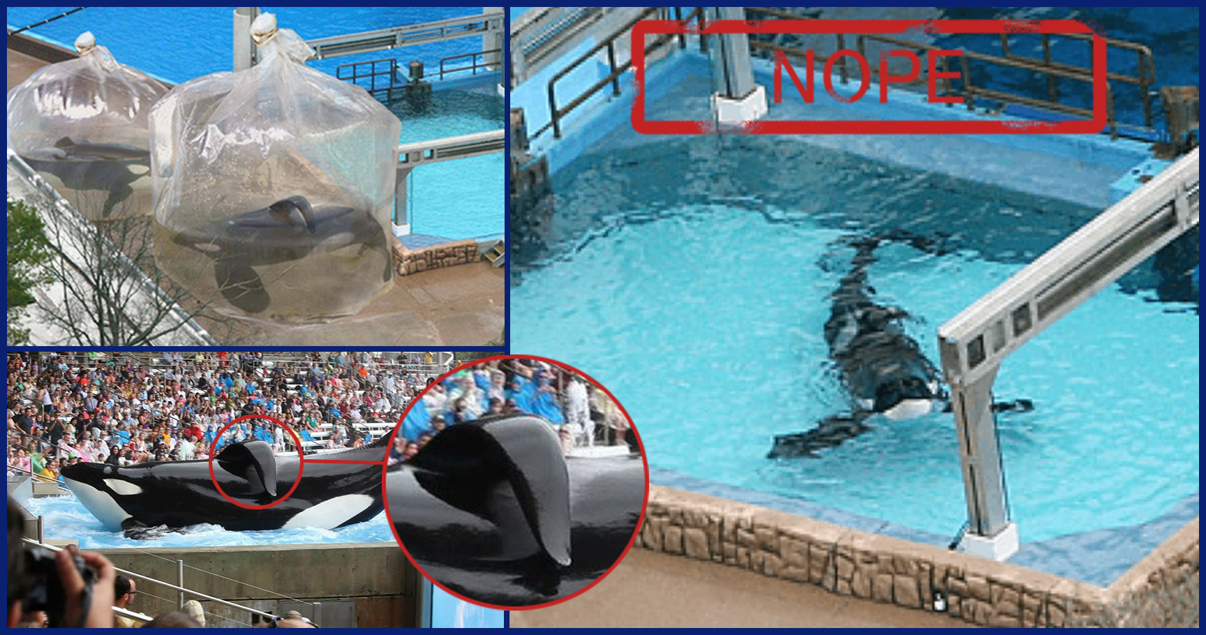 Wild About Harry >> Outrageous Images that Prove SeaWorld Should Be Shut Down